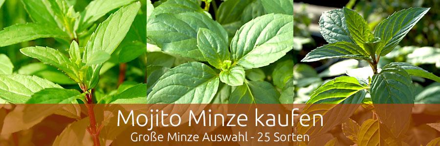 Mojito Minze